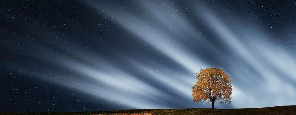 Un arbre avec un ciel magnifique la nuit
