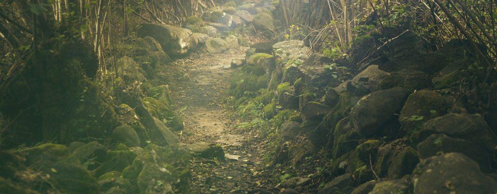 Un sentier dans la forêt bordé de pierres