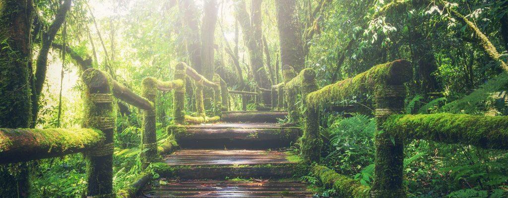 Un pont avec de la mousse dans la forêt