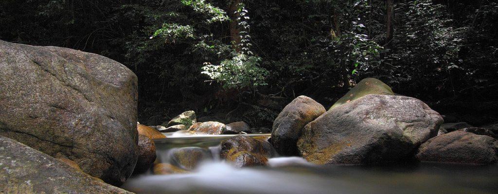 une cascade dans la forêt avec des rochers
